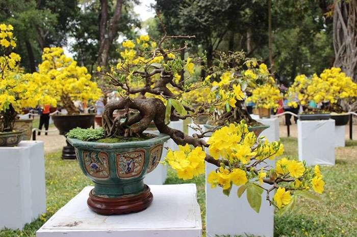 hinh-anh-dang-mai-vang-bonsai-dep