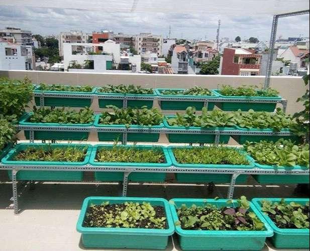 Khay nhựa trồng rau giá rẻ