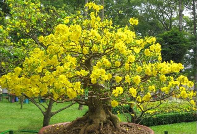 [Image: the-mai-bonsai-tu-nhien-dep.jpg]